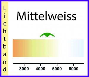 Mittelweiss